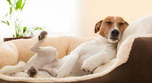 cucce-per-cani-relax