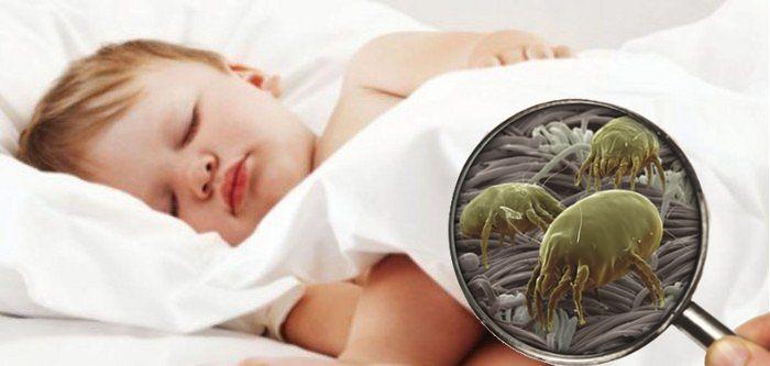 Come risolvere il problema dell 39 allergia agli acari le dolci notti - Acari nel letto ...
